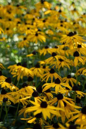 RJ-Gardens-and-Parks-037