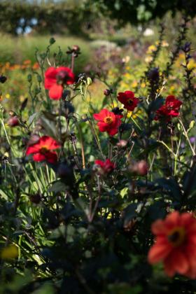 RJ-Gardens-and-Parks-038
