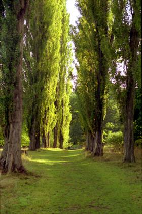 RJ-Gardens-and-Parks-179