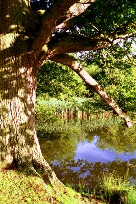 RJ-Gardens-and-Parks-188