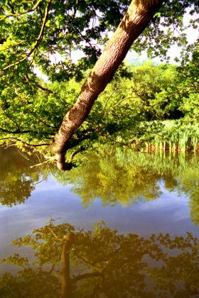 RJ-Gardens-and-Parks-189